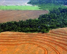 Study: Intensive Agriculture is Good | The Food Ethics Blog